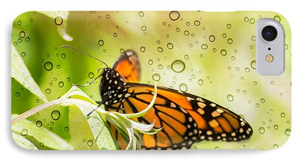 Glorious Monarch 3 IPhone Case by Rima Biswas