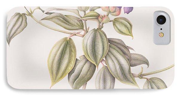 Glory Flower Tibouchina Urvilleana 1999 Wc On Paper IPhone Case by Margaret Ann Eden