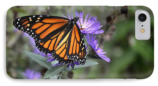 IPhone Case featuring the photograph Glowing Butterfly by Nava Thompson