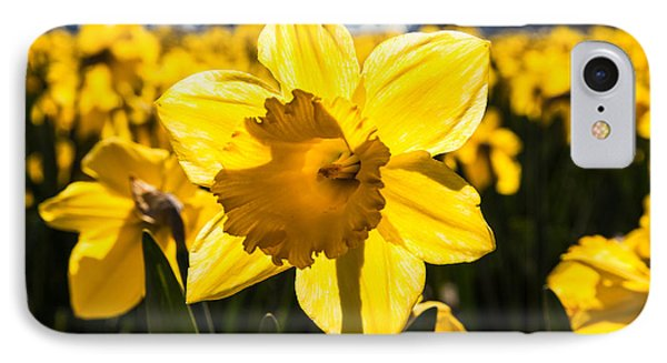 Glowing Daffodil IPhone Case