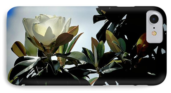 Glowing Magnolia IPhone Case by Pamela Blizzard