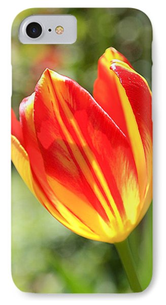 Glowing Tulip IPhone Case by Rona Black