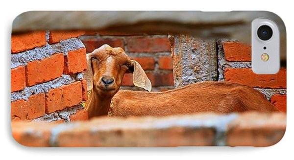 Goat In A Box IPhone Case by ARTography by Pamela Smale Williams