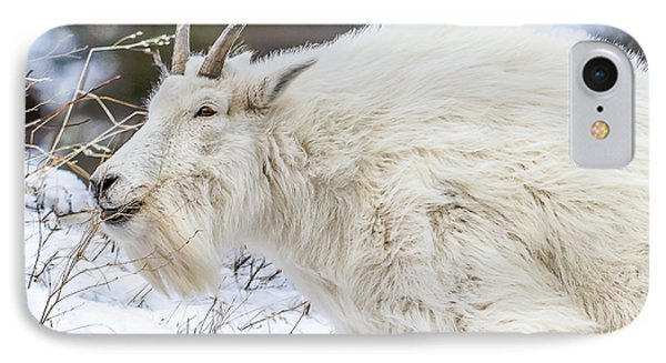 IPhone Case featuring the photograph Goat On The Mountain by Yeates Photography