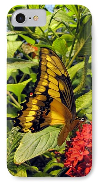 Gold Giant Swallowtail IPhone Case by Jennifer Wheatley Wolf