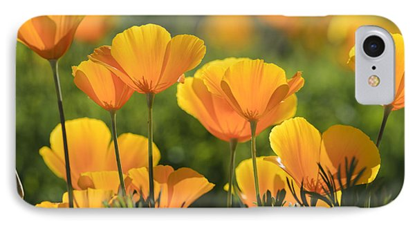 Gold Poppies IPhone Case