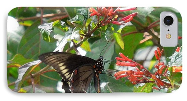 IPhone Case featuring the photograph Gold Rim Swallowtail by Ron Davidson