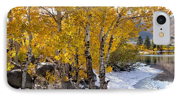 Golden Aspen Grove IPhone Case