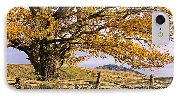 Golden Autumn Phone Case by Alan L Graham