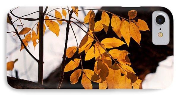 Golden Beech Leaves IPhone Case