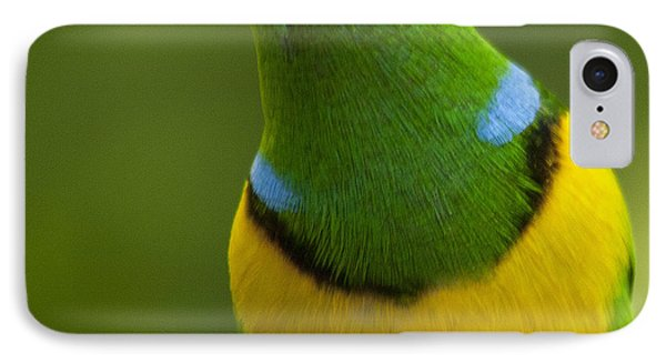 Golden-browed Chlorophonia - Chlorophonia Callophrys Phone Case by Heiko Koehrer-Wagner