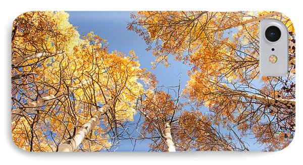 Golden Canopy IPhone Case by The Forests Edge Photography - Diane Sandoval