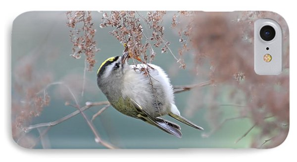 Golden Crowned Kinglet And Oceanspray IPhone Case