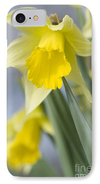 Golden Daffodils Phone Case by Anne Gilbert