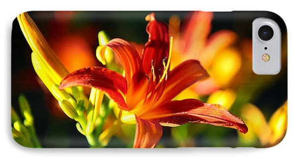 Golden Daylily Rays IPhone Case by Carol Groenen