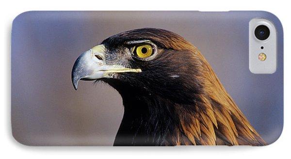 Golden Eagle (aquila Chrysaetos IPhone Case