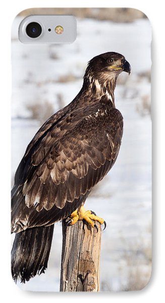 Golden Eagle On Fencepost IPhone Case