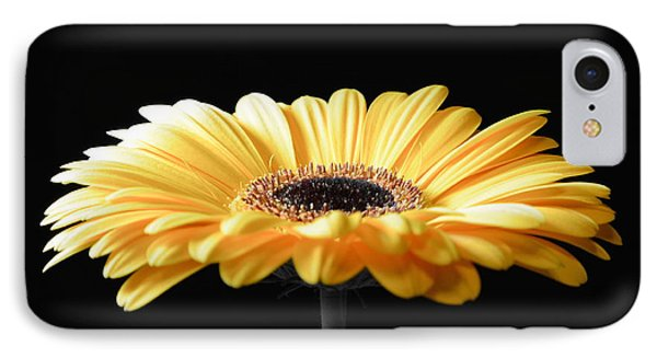 Golden Gerbera Daisy No 2 IPhone Case