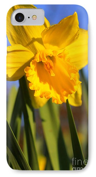 Golden Glory Daffodil IPhone Case