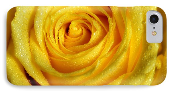 Golden Grandeur Of Nature. Yellow Rose I Phone Case by Jenny Rainbow
