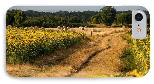Golden Hour On Country Road Phone Case by Davorin Mance
