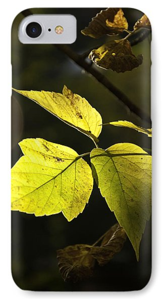 Golden Leaves IPhone Case by Craig T Burgwardt