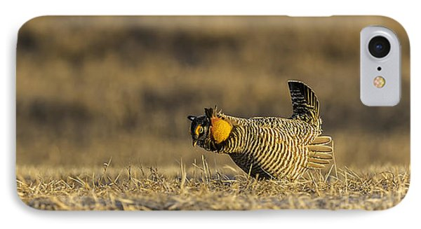 Golden Light On The Prairie Phone Case by Thomas Young