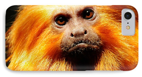 Golden Lion Tamarin IPhone Case