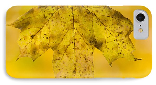 IPhone Case featuring the photograph Golden Maple Leaf by Sebastian Musial