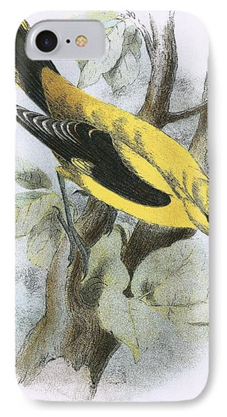 Golden Oriole IPhone Case by English School