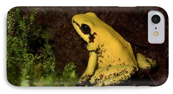 Golden Poison Arrow Frog IPhone Case by Nigel Downer
