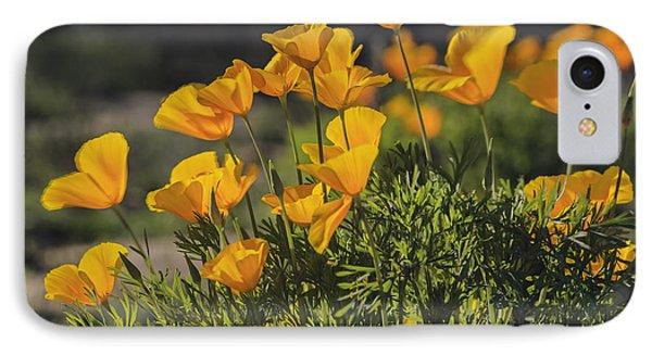 Golden Poppies IPhone Case by Tamara Becker