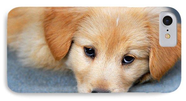 Retriever Puppy IPhone Case