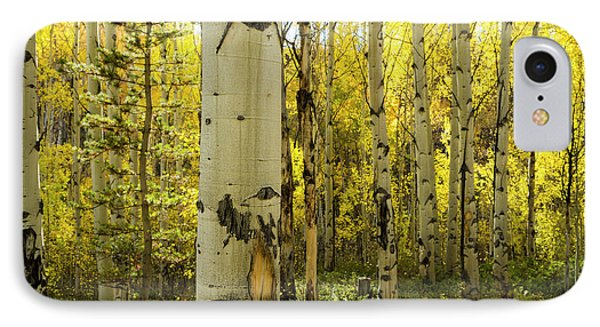 Golden Quaking Aspen In Full Fall IPhone Case by Maresa Pryor