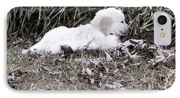 Golden Retriever Puppy 2 Phone Case by Andrea Anderegg
