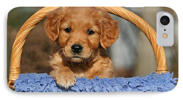 Golden Retriever Puppy In A Basket IPhone Case by Dog Photos