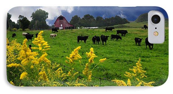 Golden Rod Black Angus Cattle  IPhone Case