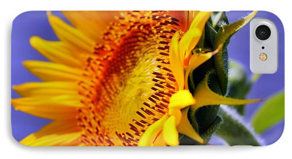 Golden Sunflower IPhone Case by Judy Palkimas