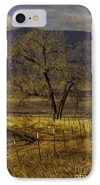 Golden Tree IPhone Case by Kristal Kraft