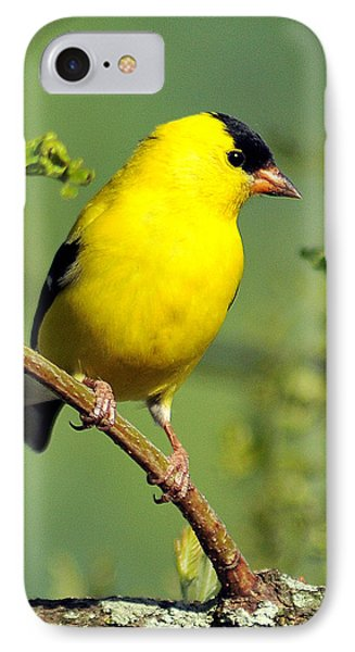 Goldfinch 328 IPhone Case