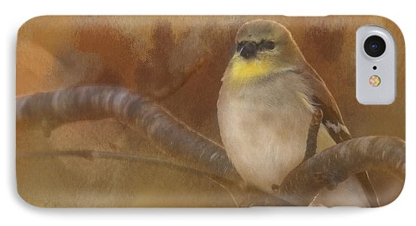 Resting Goldfinch IPhone Case by Betty  Pauwels