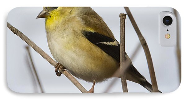 IPhone 7 Case featuring the photograph Goldfinch In It's Winter Coat by Ricky L Jones