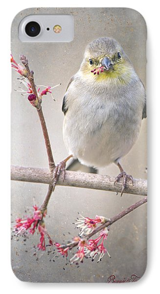 Goldfinch In Swamp Maple IPhone Case