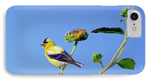 Goldfinch On Stem IPhone Case by Stephen  Johnson