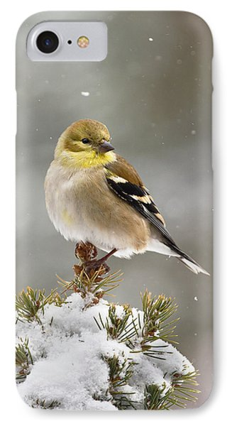 Goldfinch In The Snow IPhone Case
