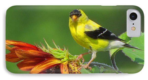 Goldfinch Pose IPhone Case by Dianne Cowen