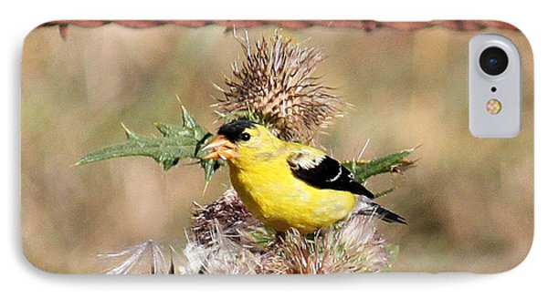 Goldfinch Quest 4 IPhone Case by Erica Hanel