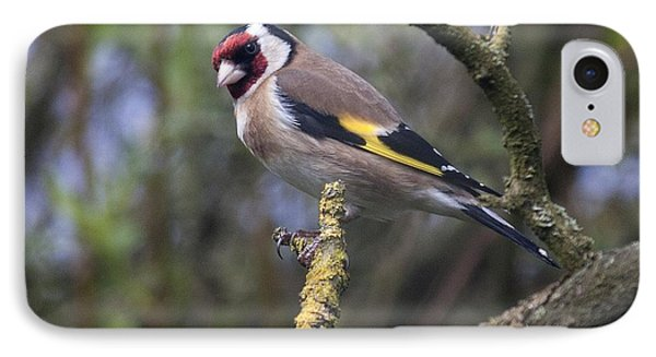Goldfinch IPhone Case by Richard Thomas