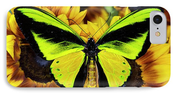 Goliath Birdwing Butterfly IPhone Case by Darrell Gulin