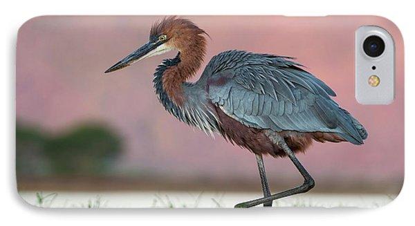 Goliath Heron Wading IPhone Case by Tony Camacho